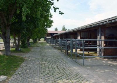 Impressionen: Pferdepension Virthahof