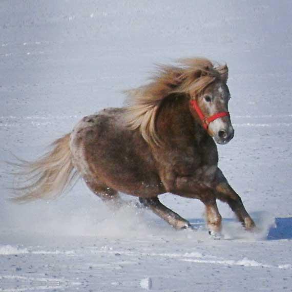 Speedy im Schnee