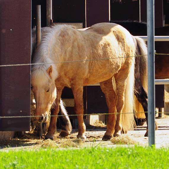 Pferdepension Reitanlage Virthahof