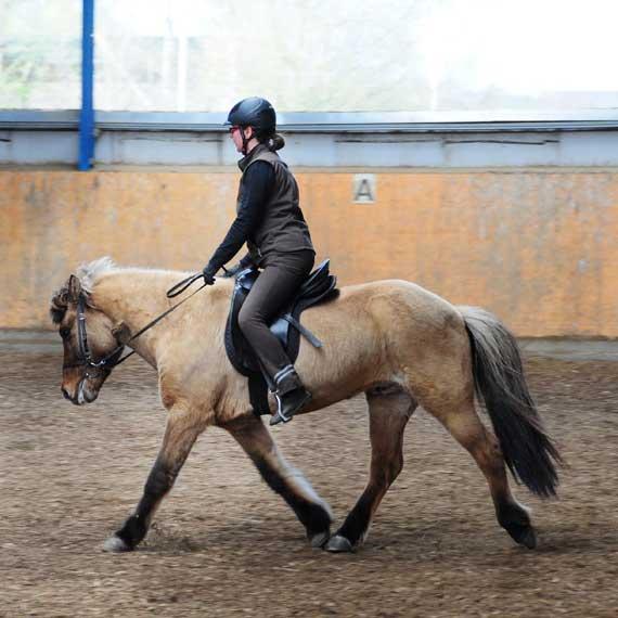 Reitunterricht auf eigenem Pferd